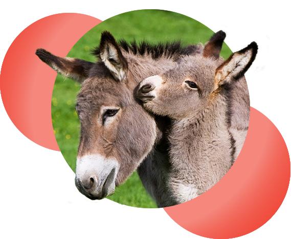 home_donkey_pic1